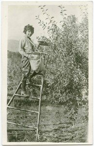 Billie Legg picking apples in Manson, Washington, 1924