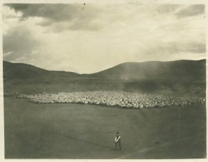 Baseball and sheep, Grant County, Washington