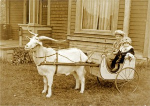 Two children in a buggy or cart behind a harnessed goat, Bellingham, WA, 1928. Nooksack Valley Heritage, WRH.